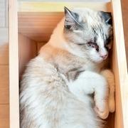 売れないプランター、ネコがくつろぐ「高級ベッド」に