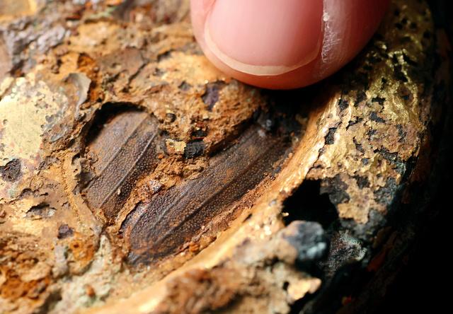 船原古墳から出土した玉虫が装飾された馬具。指さした部分などに玉虫の羽が見られる=2020年11月13日、古賀市、金子淳撮影