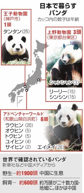 日本で暮らすパンダ