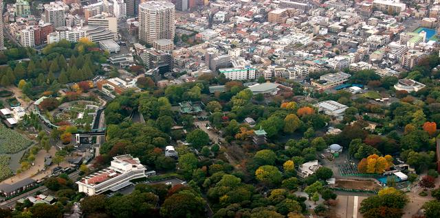 上空から上野動物園をのぞむ。写真中央、旧寛永寺五重塔の右手の大きな建物がゾウ舎で、隣にサル山が見える=東京都台東区、本社ヘリから