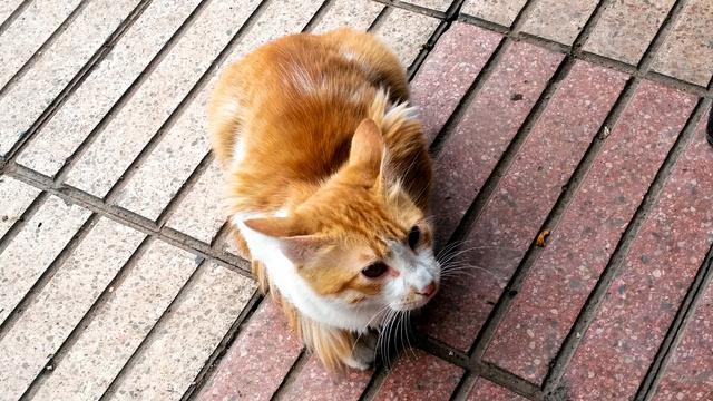 ネコの病気に対して開発されている化合物が、新型コロナウイルス感染症の治療薬としても活用できる可能性が出てきた