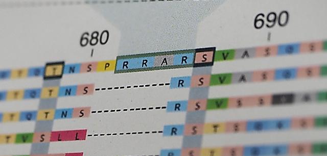 医学誌ネイチャー・メディシンに論文掲載された新型コロナウイルスに特徴的な「RRAR」の配列。コウモリなどからのコロナウイルスには、この配列はみられない