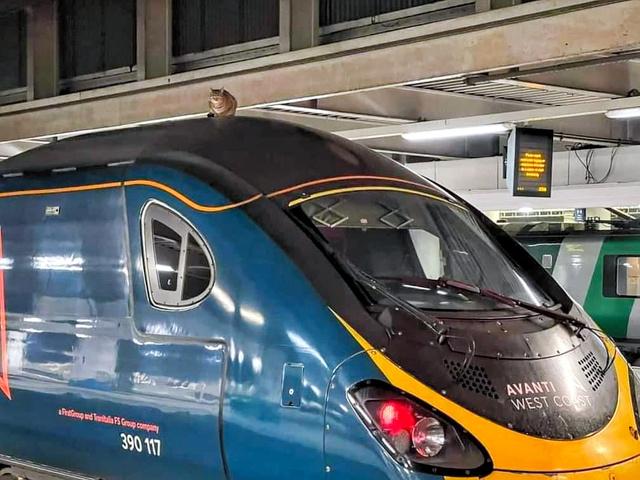 ロンドンのユーストン駅で2日、列車の車両の屋根で座るネコ=英国の鉄道会社「ネットワークレール」提供