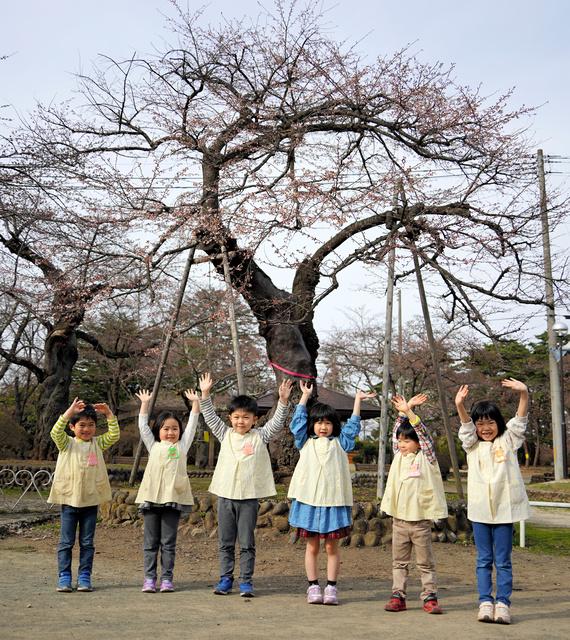 開花した桜の下で記念写真に納まる園児たち=2021年4月2日、岩手県奥州市