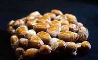 16)京納豆 菌は時を越えて:発酵を終えたばかりの納豆。うっすらとした菌膜が豆の上に降りた霜のよう=京都市伏見区、遠藤真梨撮影