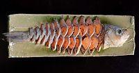 5)滋賀・ふなずし 酸いも甘いも:皿に盛られた、ふなずし。約2年間熟成させた独特の香りが漂った=滋賀県高島市の「魚治」、竹花徹朗撮影