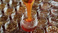 61)京都のひやしあめ:「ひやしあめのもと」を容器に詰める。半透明で茶色の帯が容器の中で幾重にも折り重なった=京都府宇治市