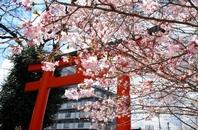 京都 よむ・みる・あるく