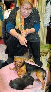 写真:犬の乳を吸う子猫を見守る山道康子さん=北海道平取町二風谷