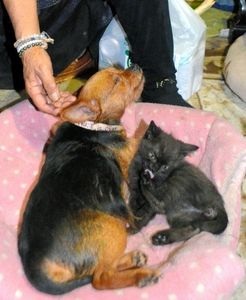 写真:仲良しの犬と子猫=北海道平取町二風谷