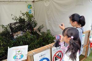 写真:白タヌキと、写真をとる子ども=鳥取市の湖山池公園