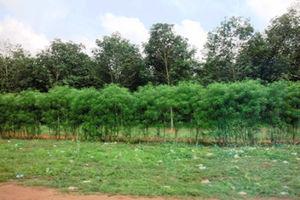 向こうの林がゴムの木=写真はいずれも9日、江木慎吾撮影
