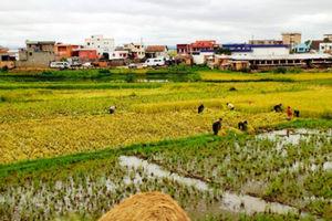 空港への道沿いで稲の刈り入れが進んでいた=12日、江木慎吾撮影
