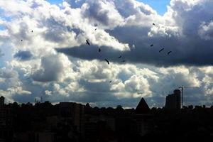 ハゲコウの舞うカンパラの空。右奥の高いビルは建設の進むヒルトンホテル