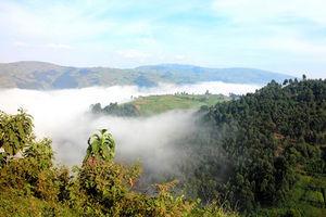 朝、雲海が広がるウガンダ・ルワンダ国境地帯