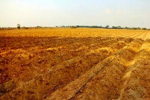 苗を待つチャンスさんのタバコ畑。タバコは連作がきかないので、一度収穫すると土を寝かせる