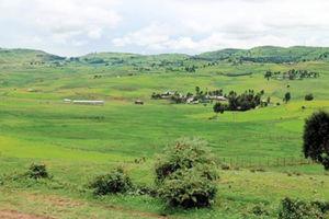 高原は緑に覆われていた