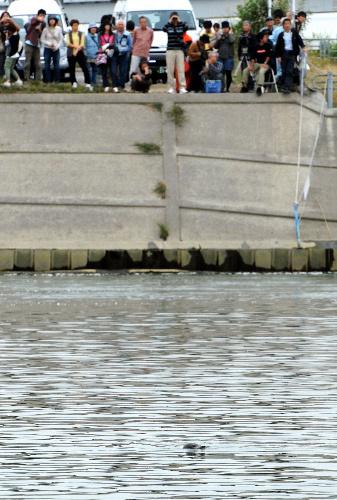 写真:荒川に現れたアザラシを見物する人たち=11日午後、埼玉県志木市、森井英二郎撮影