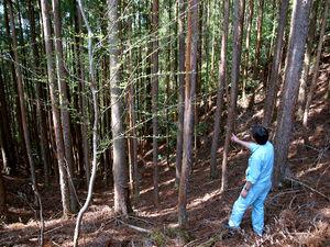 写真:間伐がされず、細い木が密集した水源域の森林。昨年末に町が購入した=4月24日、徳島県那賀町