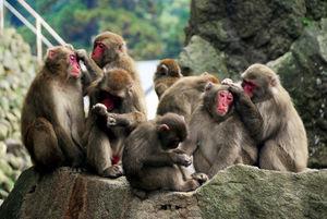 写真:毛繕いをするサル=高崎山自然動物園
