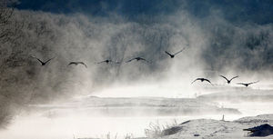 写真:けあらしが立ちこめる中、飛び立つタンチョウ=27日午前、北海道鶴居村、杉本康弘撮影