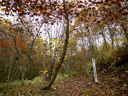 写真:「森は海の恋人」が植林した森。24年間で約4万本、14ヘクタールに及ぶ