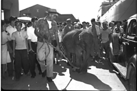タイ生まれのゾウが神戸港に到着。その後、「はな子」と命名された=1949年9月2日