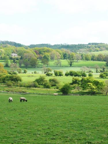 写真:イギリスの田舎。なだらかな牧草地に羊が牛や放牧されている