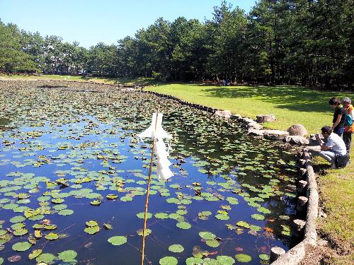 写真: 神域であることを表す御幣(ごへい)がほとりに立つ「みそぎ池(御池)」=宮崎市、小川雪撮影