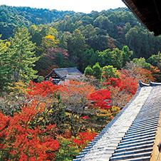 秋の京都 南禅寺周辺 三門×紅葉