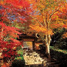 秋の京都 寂光院 悲劇の姫を癒した深山のもみじ