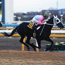 日本馬初のジャパンカップ優勝を果たしたカツラギエース