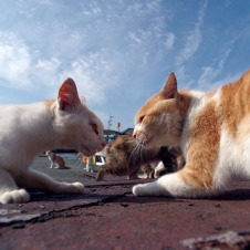 14人の住民と200匹の猫の島