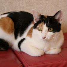 日本は動物愛護の後進国? 保護猫カフェから考える