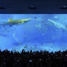 〈沖縄建築パラダイス〉感動を与える「沖縄美ら海水族館」