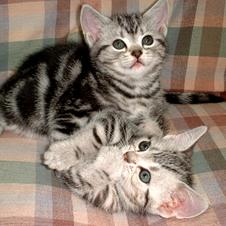 「新たに猫をもう一匹迎えたい」