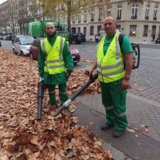 至る所にある美しい落ち葉の絨毯