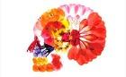 色鮮やかな押し花で骨格標本