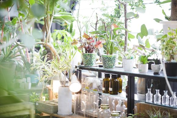 変わった植物に出会える 京都的グリーンライフ 《京都ゆるり休日さんぽ》