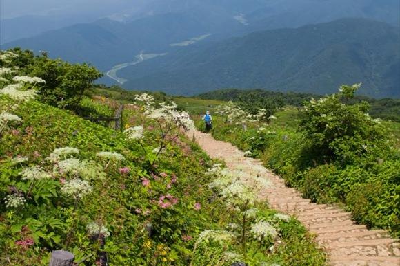 <第37回>高山植物咲く伊吹山へ、九合目からの山ハイク