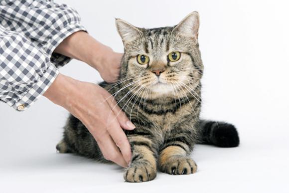 猫を飼い始めました よい動物病院を探すには