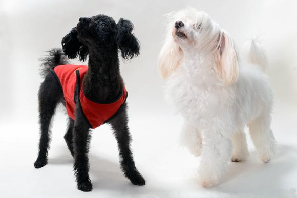 2匹の飼い犬を仲良くさせるコツは?