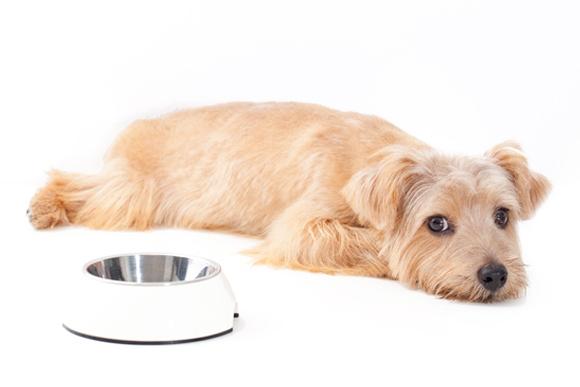 飼い犬がごはんを食べなくて困っています
