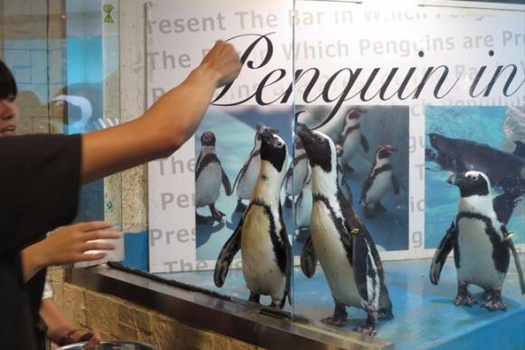 暑さも吹き飛び癒やされる ペンギンに会えるバー