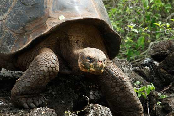 ガラパゴスで出会える動物や景色