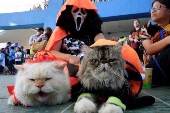 イヌもネコも大胆仮装 世界のハロウィーン・アニマル