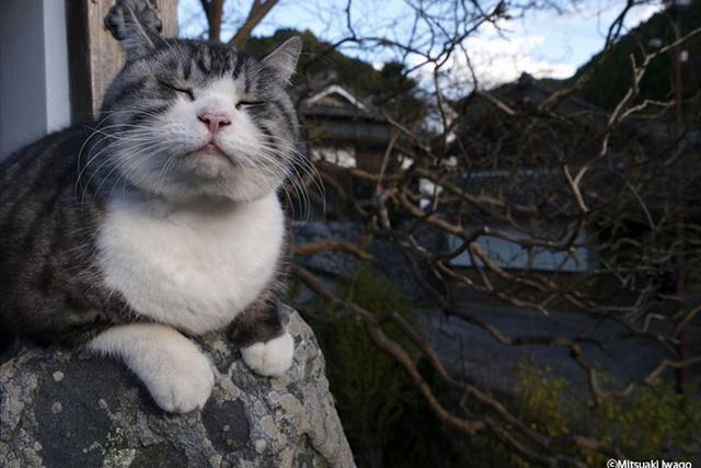 年始めもネコづくし 「ネコ歩き」岩合さんの写真展、各地で開催中