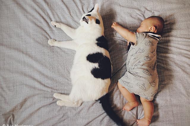 家族は似てくる? みんなの猫暮らし