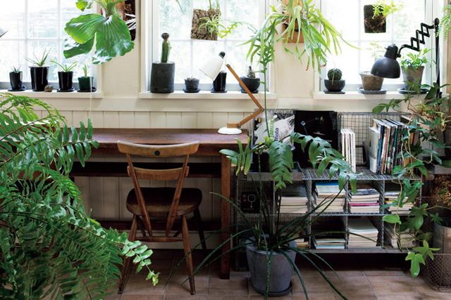 人と植物、どっちが主役? グリーンで楽しむインテリア