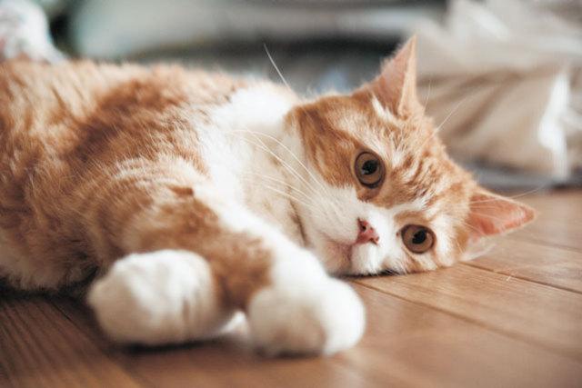 世界一相撲を見ている、荒汐部屋の猫